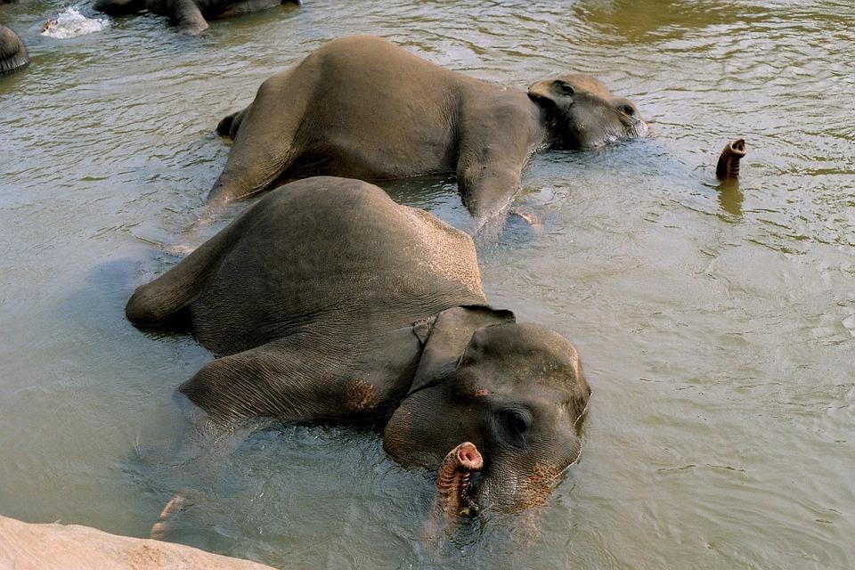 Sommer in Andalusien - Abkühlung Elefanten